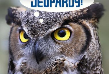 jepardy 550